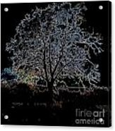 Walnut Tree Series Glowing Edges Acrylic Print