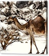 Wanderer Acrylic Print by George Paris