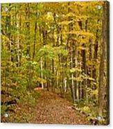 Wandering Trail 6 Acrylic Print