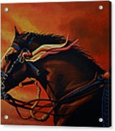 War Horse Joey  Acrylic Print by Paul Meijering