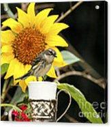 Sunflower And Warbler Bird Acrylic Print