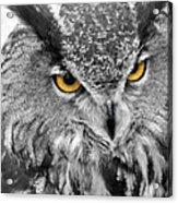 Watching You Owl Acrylic Print