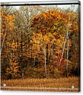 Warm Autumn Glow Acrylic Print