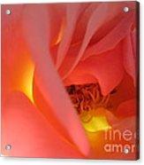 Warm Glow Pink Rose 2 Acrylic Print