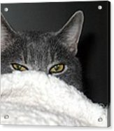 Warm Kitty Acrylic Print