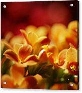 Warm Spring Glow Acrylic Print