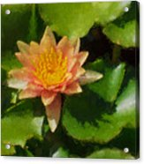 Warm Yellows Oranges And Corals - A Waterlily Impression Acrylic Print