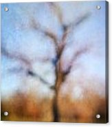 Warner Park Tree Acrylic Print