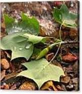 Washed Up Leaves Acrylic Print