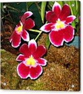 Washington Dc - Us Botanic Garden. - 121215 Acrylic Print