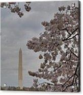 Washington Monument - Cherry Blossoms - Washington Dc - 011319 Acrylic Print by DC Photographer