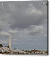 Washington Monument - Cherry Blossoms - Washington Dc - 011333 Acrylic Print