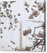 Washington Monument - Cherry Blossoms - Washington Dc - 011339 Acrylic Print