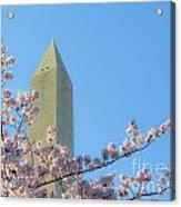 Washington Monument With Blossoms Acrylic Print