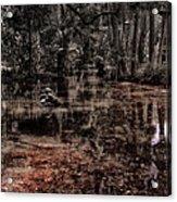 Washington Oaks Acrylic Print