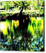 Washington Park Acrylic Print