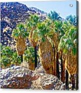 Washingtonian Fan Palm Grove Along Lower Palm Canyon Trail Near Palm Springs-california  Acrylic Print