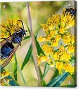 Wasp 2 Acrylic Print