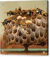 Wasp Hotel Acrylic Print