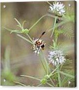 Wasp Variety Acrylic Print