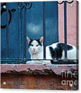 Watchful Cat, Mexico Acrylic Print