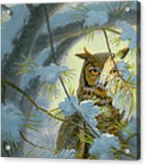 Watchful Eye-owl Acrylic Print by Paul Krapf