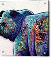 Watchful Eyes - Grizzly Bear Acrylic Print