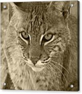 Watchful Eyes-sepia Acrylic Print