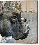 Watchful Acrylic Print by Judy Wood
