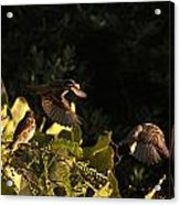 Watching A Fly-by Acrylic Print