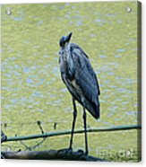 Watching Me Watching You Acrylic Print