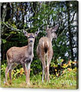 Watching Out For Mom Acrylic Print