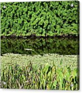 Water And Green Acrylic Print