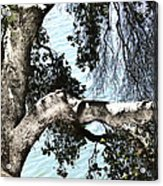 Water Beyond The Tree Acrylic Print