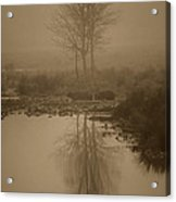 Water Buffalo Morning Fog Acrylic Print