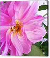 Water Color Dahlia Acrylic Print