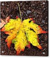 Water Colored Leaf - Autumn Acrylic Print
