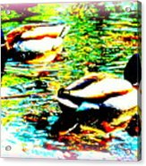 So Water Dance Is For Dancing Ducks  Acrylic Print