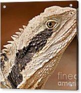 Water Dragon Close Up Acrylic Print