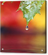 Water Dripping Acrylic Print