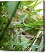 Water Droplet On Grass Blade Acrylic Print