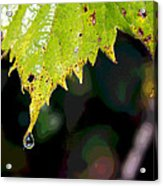 Water Droplet On Leaf Acrylic Print by Greg Thiemeyer