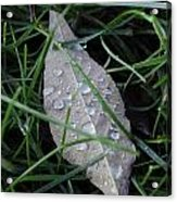 Water Droplets On Leaf Acrylic Print