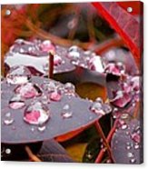 Water Drops After The Rain Acrylic Print