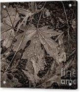 Water Drops On Fallen Leaves Acrylic Print