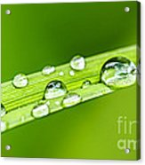 Water Drops On Grass Blade Acrylic Print by Elena Elisseeva