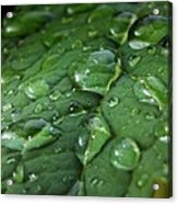 Water Drops On Leaf 1 Acrylic Print