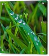Water Drops On The  Grass 0014 Acrylic Print