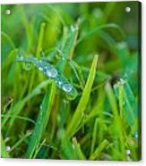 Water Drops On The  Grass 0018 Acrylic Print