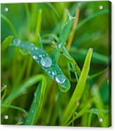 Water Drops On The  Grass 0019 Acrylic Print